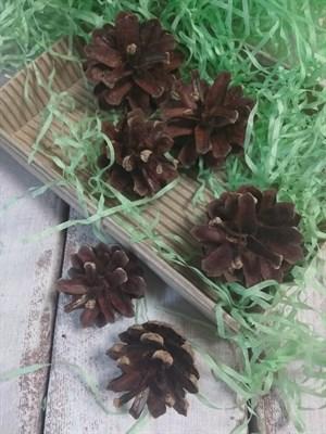Шишки сосновые с южного берега Белого моря 6 шт, 3-6 см - фото 7903